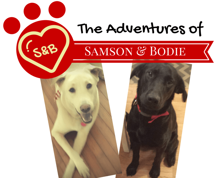 The Adventures of Samson and Bodie- Pup Portraits